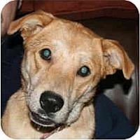 Adopt A Pet :: Trixie - kennebunkport, ME