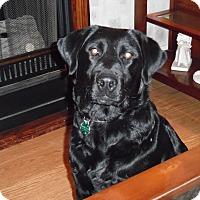 Adopt A Pet :: Allie - Salem, MA