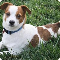 Adopt A Pet :: Nico - Bellflower, CA