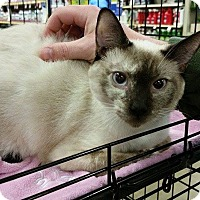 Adopt A Pet :: Sushi - McDonough, GA