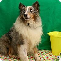 Adopt A Pet :: Rocky  (3) - Mission, KS