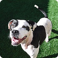 Adopt A Pet :: Ann - Atlanta, GA