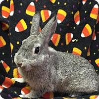 Adopt A Pet :: Cypress - Columbus, OH