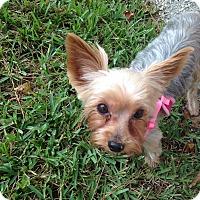Adopt A Pet :: Maggie - North Port, FL