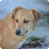 Adopt A Pet :: Falcon - Racine, WI