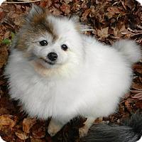 Adopt A Pet :: Jezabel - Orange, CA