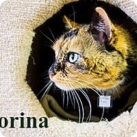 Adopt A Pet :: Corina - Hamilton, MT