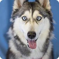 Adopt A Pet :: Miya - Bradenton, FL