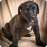 Adopt A Pet :: CAMERON - Anna, IL