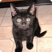 Adopt A Pet :: Inky Dinky - Kirkwood, DE