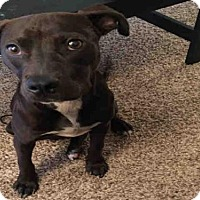 Adopt A Pet :: A385533 - San Antonio, TX