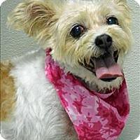 Adopt A Pet :: Abby - Topeka, KS