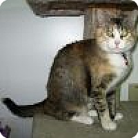 Adopt A Pet :: Hannah - Powell, OH