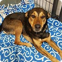 Adopt A Pet :: Chloe - Cedar Rapids, IA