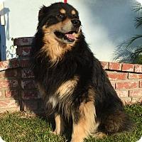 Adopt A Pet :: Benny - Fullerton, CA