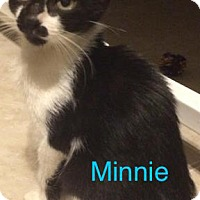 Adopt A Pet :: Minnie - Satellite Beach, FL