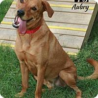Labrador Retriever/Vizsla Mix Dog for adoption in Tomball, Texas - Aubrey