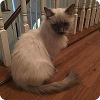 Adopt A Pet :: Luna - ROSENBERG, TX