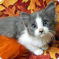 Adopt A Pet :: GiGi - Columbus, NE