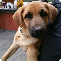 Adopt A Pet :: Dayton - Hillside, IL
