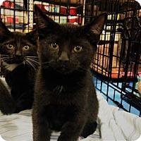 Adopt A Pet :: North - Ephrata, PA