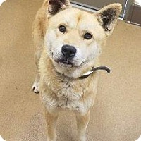 Adopt A Pet :: Dino #162702 - Apple Valley, CA