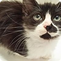 Adopt A Pet :: Sophie - Oakland Park, FL