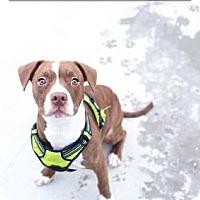 Adopt A Pet :: Alejandro - Mt. Pleasant, MI