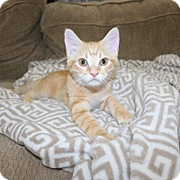 Adopt A Pet :: Cubby - Edmond, OK