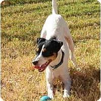 Adopt A Pet :: JOKER - Phoenix, AZ