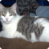 Adopt A Pet :: K-Hart3-Brandi - Colorado Springs, CO