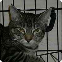 Adopt A Pet :: Petunia - Brea, CA