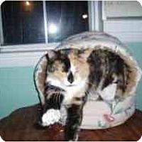 Adopt A Pet :: Molly Ann - Hamburg, NY