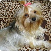 Adopt A Pet :: Callie - Mooy, AL