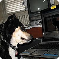 Shepherd (Unknown Type) Mix Dog for adoption in Doylestown, Pennsylvania - Thelma