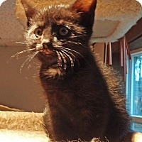 Adopt A Pet :: Thackery - N. Billerica, MA
