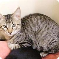 Adopt A Pet :: NATOMAS - Fresno, CA