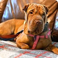Adopt A Pet :: Penelope - Santa Monica, CA