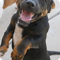 Adopt A Pet :: Michael Angelo - dewey, AZ