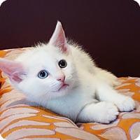 Adopt A Pet :: Celine - Brooklyn, NY
