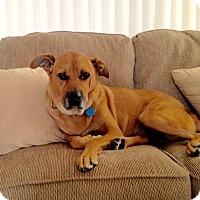Adopt A Pet :: *URGENT* Chester - Van Nuys, CA