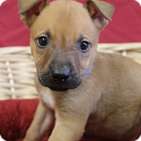Adopt A Pet :: Bobby - Waldorf, MD