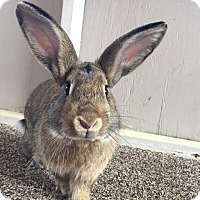 Adopt A Pet :: Berry - Williston, FL