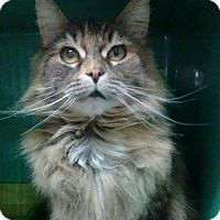 Adopt A Pet :: Sahara - THORNHILL, ON