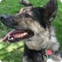 Adopt A Pet :: Artie - Bloomington, IL