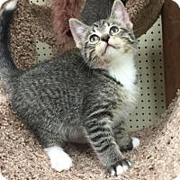 Adopt A Pet :: Hoover - Ortonville, MI