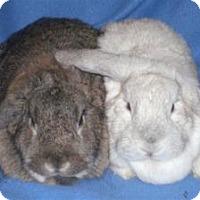 Adopt A Pet :: Priscilla - Woburn, MA