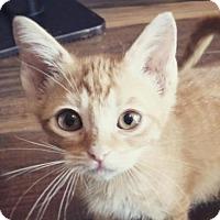Adopt A Pet :: Korben - Austin, TX