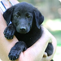 Adopt A Pet :: Wyatt Earp - Glastonbury, CT