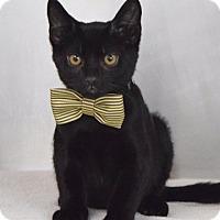 Adopt A Pet :: Eider - Dublin, CA